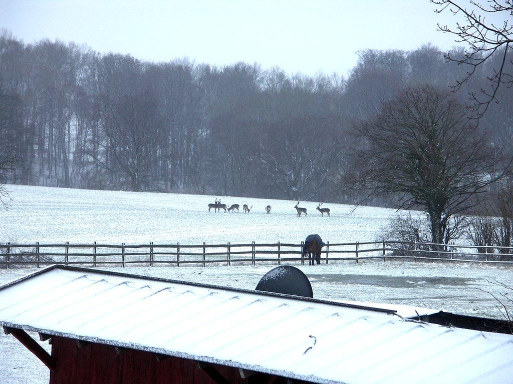 Eichenhof im Winter