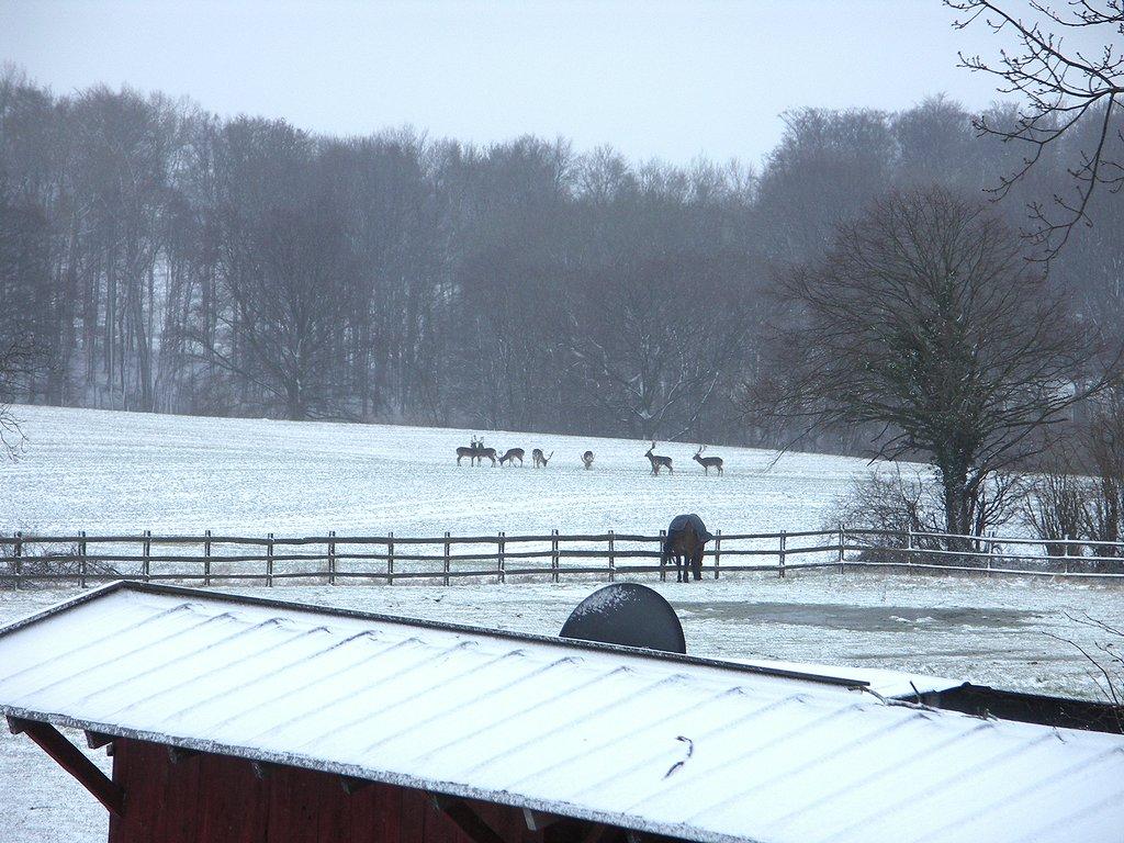 Hirsche und Pferde im Winter