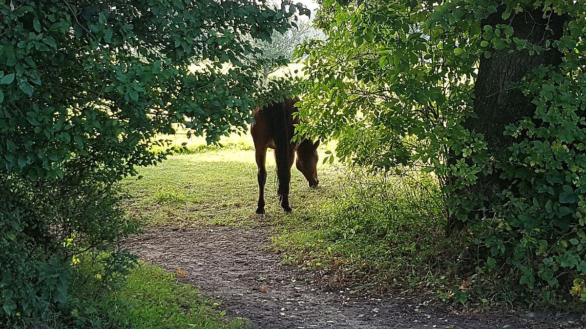 Pferdekoppel in Lindhöft